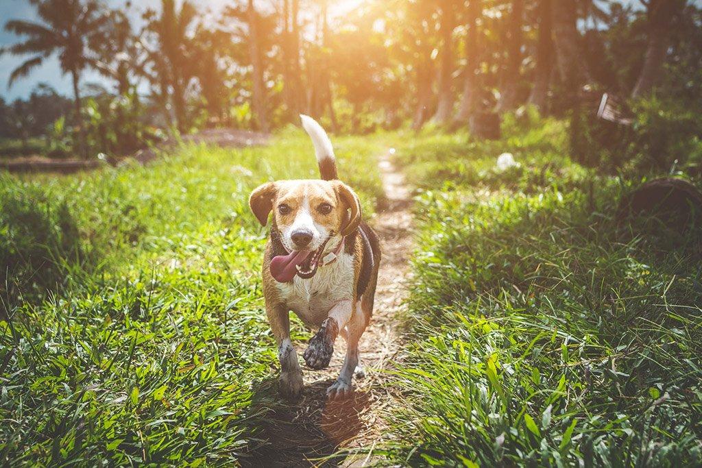 Qual o tipo de tosa ideal para seu cão?